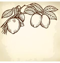 lemon branch vector image vector image