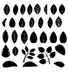 black leaves vector image
