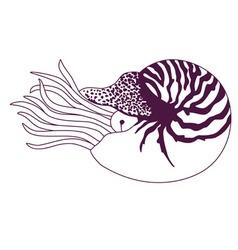 Nautilus pompilius vector