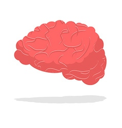 Human brain isolated brain on white background vector