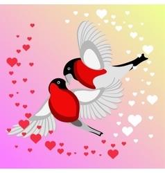 Bullfinch Birds kissing vector image