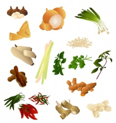 thai herbs and spices vector image