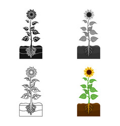 Sunflower single icon in cartoon stylesunflower vector