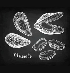 Chalk sketch of mussels vector