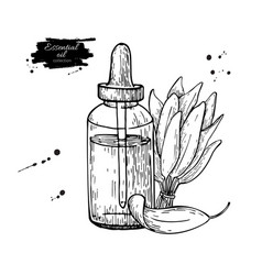 Sage essential oil bottle and sage leaves hand vector