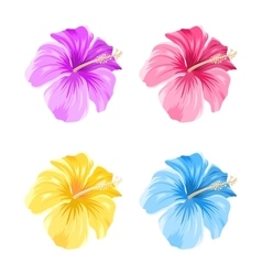 Set of Colorful Hibiscus Flowers Blossom Isolated vector image