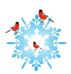 Bullfinches on a snowflake vector image vector image