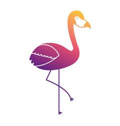 pink flamingo bird exotic image vector image
