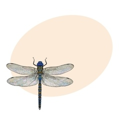 Top view of dragonfly with transparent wings vector