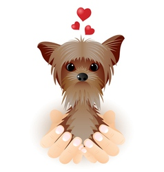 Yorkshire terrier in love vector