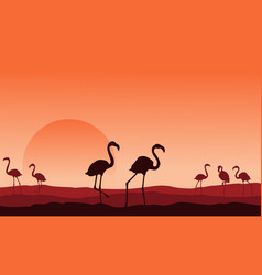 Collection of flamingo scenery silhouette design vector
