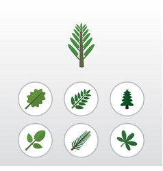 Flat icon nature set of acacia leaf maple spruce vector