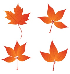 orange leaves vector image vector image