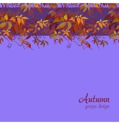 Autumn grape vine vector