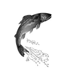 Trout jumps salmon-predatory fish as wrought metal vector