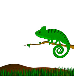 background with green chameleon vector image