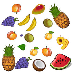 set of appetites tropical fruites vector image vector image