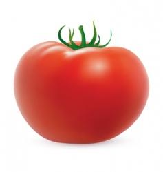 ripe tomato vector image