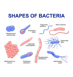 bacteria vector image