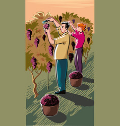 Man and girl in a vineyard vector