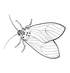 Top view of gray moth isolated sketch style vector