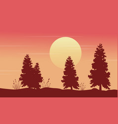 at morning spruce scenery silhouettes vector image vector image
