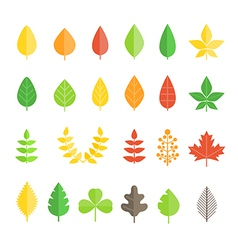 Different leaf collection isolated on white vector