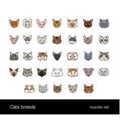 Set of muzzles different cats breeds big vector