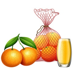 Fresh orange and orange juice vector image