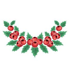 mistletoe branch red berries vector image