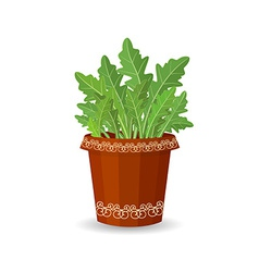 Arugula in a flower pot vector