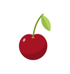 cherries isolated cherry on white background red vector image vector image