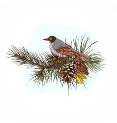 Pine branches with bird vector
