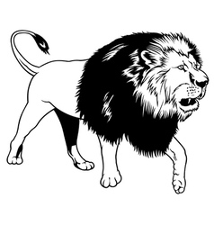 Walking lion vector