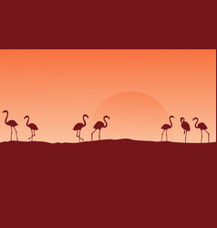 scenery flamingo at hill silhouettes vector image vector image