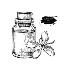 marjoram essential oil bottle and marjoram leaves vector image vector image