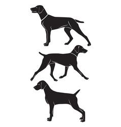 Weimaraner dog vector