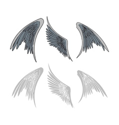 Avian wings vector