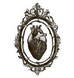 Human anatomical heart vector