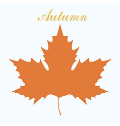 Maple leaf design vector