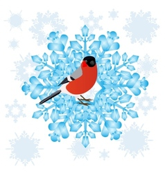 Bullfinch and a snowflake vector