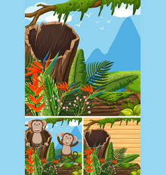 Scenes with monkeys in the forest vector