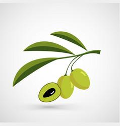 Olive oil decorative olive branch vector