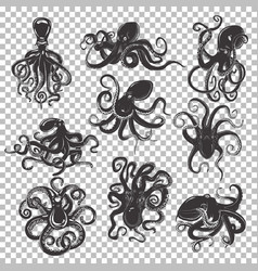 set of isolated octopus mascot or tattoo vector image vector image