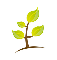 Colorful silhouette of plant with stem and leaves vector