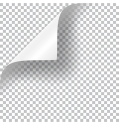 Curly Page Corner vector image vector image