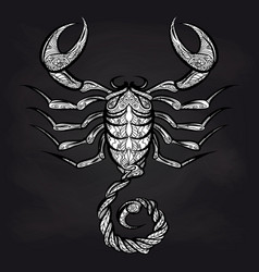 doodle scorpion on blackboard vector image vector image