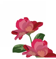 Roses isolated on white vector image vector image