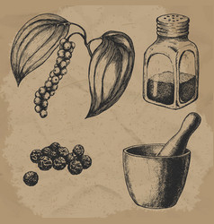 black pepper plant and seeds hand mortar with a vector image