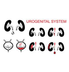 Urogenital system kidneys bladder vector